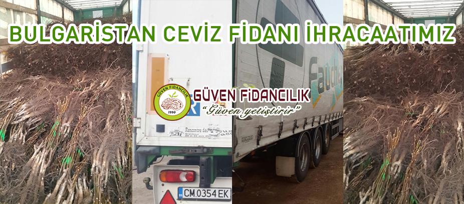 bulgaristan-ceviz-fidani-ihrac